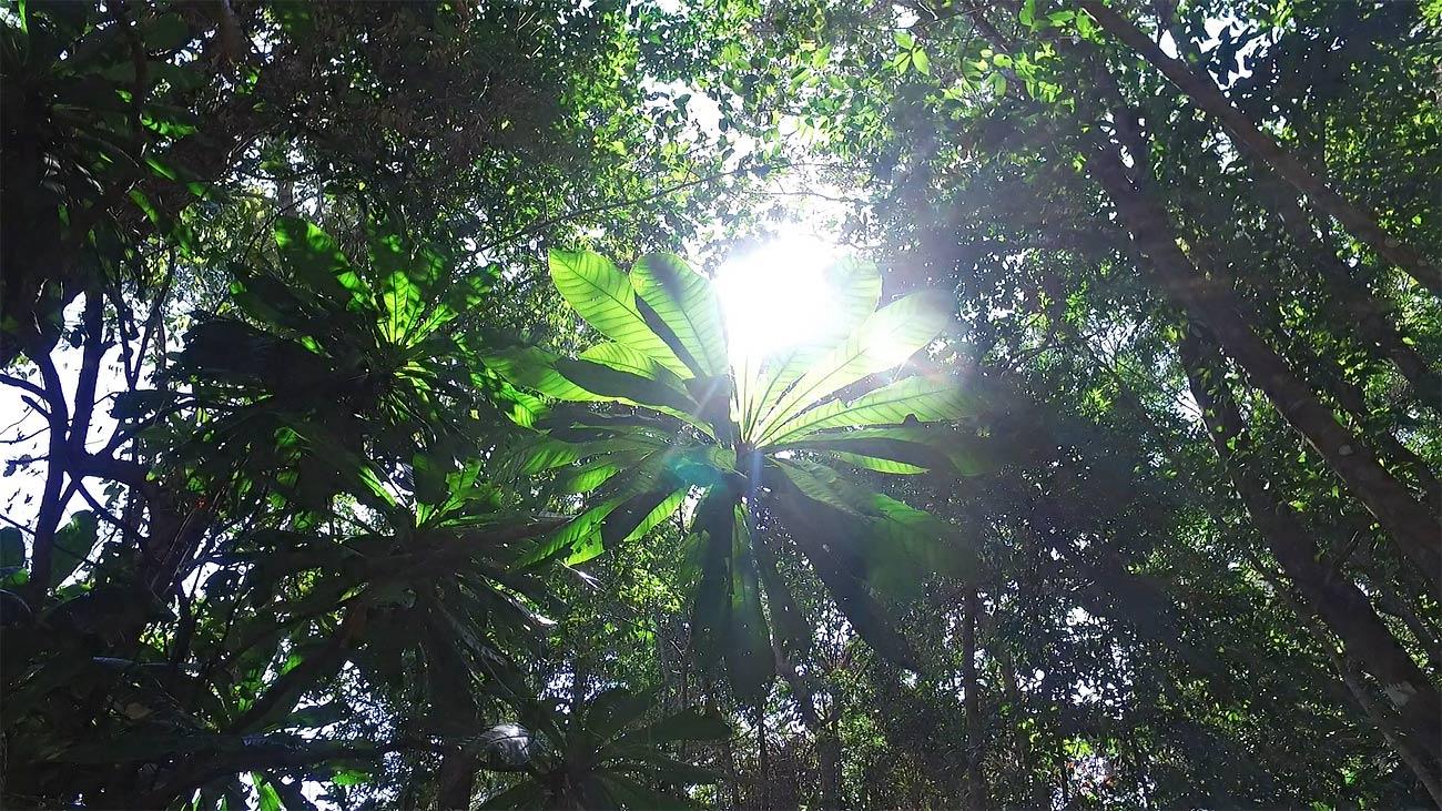 sun flare jungle rainforest asia